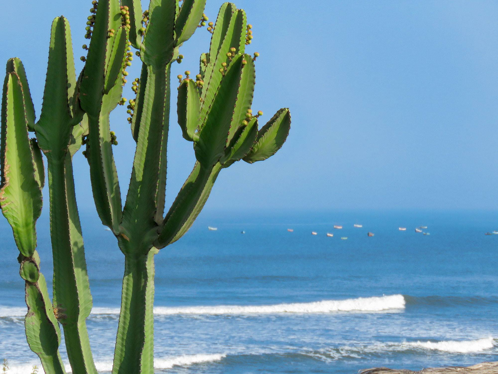 Desert Cactus Waves and Fishing Boats
