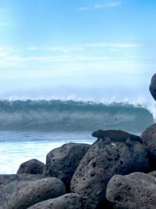 Iguana Surf #2