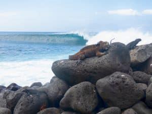 iguana surf #3 (w/xtra crab)
