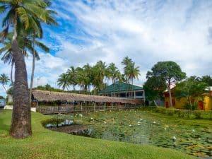 Fiji Reflect #1